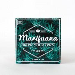 """Vypestuj si vlastnú """"Marihuanu"""""""
